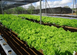 11.03.14 agricultura familiar 22 270x192 - Paraíba comercializará produtos da agricultura familiar na Copa do Mundo