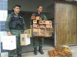policia ambiental recupera 645 animais silvestres em operacao 2 270x202 - Polícia ambiental apreendeu 645 animais silvestres no 1º bimestre