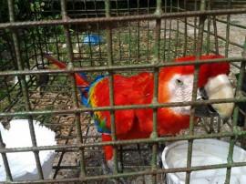 policia ambiental recupera 645 animais silvestres em operacao 3 270x202 - Polícia ambiental apreendeu 645 animais silvestres no 1º bimestre