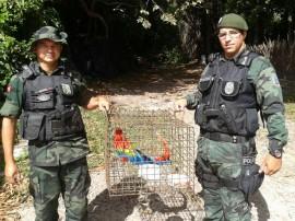 policia ambiental recupera 645 animais silvestres em operacao 4 270x202 - Polícia ambiental apreendeu 645 animais silvestres no 1º bimestre