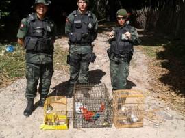 policia ambiental recupera 645 animais silvestres em operacao 5 270x202 - Polícia ambiental apreendeu 645 animais silvestres no 1º bimestre