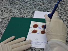 teste de partenidade FOTO Ricardo Puppe 1 270x202 - Hemocentro da Paraíba realiza seis mil exames de paternidade