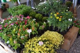 28.04.14 edição da Feira das Flores da Paraíba 2 270x179 - Governo do Estado divulga programação da Feira das Flores na Empasa