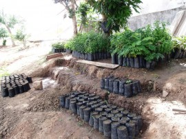 GEDC1534 270x202 - Mudas cultivadas por reeducandos são plantadas nas ruas e praças de Campina Grande