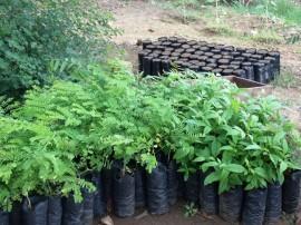 GEDC1538 270x202 - Mudas cultivadas por reeducandos são plantadas nas ruas e praças de Campina Grande