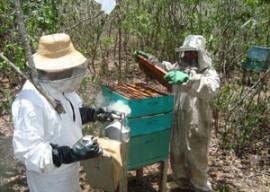 apicultura agricultura familiar emater 270x192 - Governo constrói casas de mel para apicultores do Vale do Paraíba