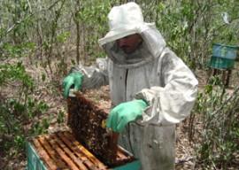 apicultura agricultura familiar emater 1 270x192 - Governo constrói casas de mel para apicultores do Vale do Paraíba