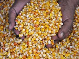 sementes de milho foto antonio david 2 270x202 - Agricultores do Vale do Piancó recebem sementes do Governo do Estado