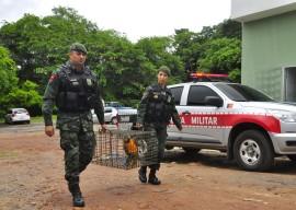 05.05.14 POLICIA AMBIENTAL FOTOS WALTER RAFAEL 7 270x192 - Polícia registra quase 500 denúncias de crimes ambientais este ano na Paraíba