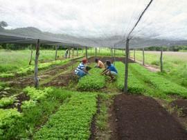 113Hortaliçãs sem agrotóxicos 270x202 - Emater incentiva produção de hortaliças sem agrotóxicos em Cajazeirinhas