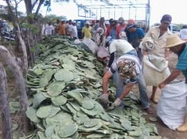 14.05.14 programa producao palma forrageira 3 270x202 - Estado tem apoio do Insa em programa de produção de palma forrageira