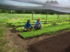154hortaliças sem agrotóxicos 270x202 - Emater incentiva produção de hortaliças sem agrotóxicos em Cajazeirinhas