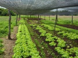 166hortaliças sem agrotóxicos 270x202 - Emater incentiva produção de hortaliças sem agrotóxicos em Cajazeirinhas