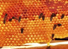 26.10.12 apicultores+foto alberi pontes 2 270x192 - Apicultura vira negócio rentável para agricultores no Sertão paraibano
