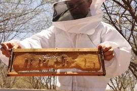 26.10.12 apicultura abelhas santa helena foto alberi pontes 44 270x179 - Apicultura vira negócio rentável para agricultores no Sertão paraibano
