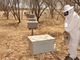 26.10.12 apicultura abelhas santa helena foto alberi pontes 49 270x205 - Apicultura vira negócio rentável para agricultores no Sertão paraibano