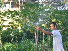colonia agricula em mangabeira milho foto joao francisco 4 270x202 - Penitenciária Agrícola de Mangabeira inicia mais um ciclo de colheita de frutas