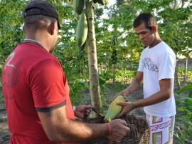 colonia agricula penitenciaria em mangabeira mamao foto joao francisco 161 270x202 - Penitenciária Agrícola de Mangabeira inicia mais um ciclo de colheita de frutas