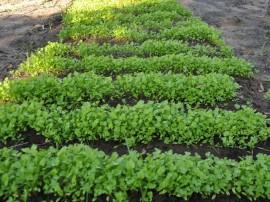 colonia agriculo em mangabeira cuentro foto joao francisco1 270x202 - Penitenciária Agrícola de Mangabeira inicia mais um ciclo de colheita de frutas