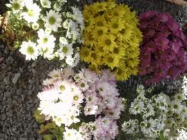 ff20 270x202 - Governo do Estado promove 6ª Feira de Flores na Empasa