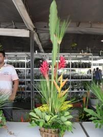 ff31 202x270 - Governo do Estado promove 6ª Feira de Flores na Empasa