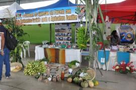 09.06.14 agricultores sousa aprendem combater praga coco 22 270x179 - Agricultores aprendem a combater praga do coco em Jornada de Inclusão