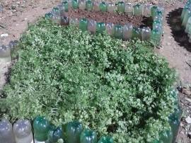 16.06.14 agricultoras de santa ceclia cultivam hortas orgnicas 1 270x202 - Emater incentiva agricultoras de Santa Cecília a cultivarem hortas orgânicas