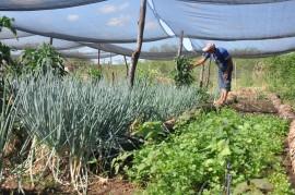emater jornada de inclusao produtiva regiao de catole do rocha pombal e sousa 2 270x179 - Governo beneficia agricultores de Catolé do Rocha, Pombal e Sousa