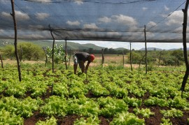 emater jornada de inclusao produtiva regiao de catole do rocha pombal e sousa 31 270x179 - Governo beneficia agricultores de Catolé do Rocha, Pombal e Sousa