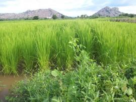 emater producao de arroz vemelho 1 270x202 - Governo inova em sistema de produção para manter ranking de maior plantador de arroz vermelho