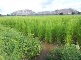 emater producao de arroz vemelho 3 270x202 - Governo inova em sistema de produção para manter ranking de maior plantador de arroz vermelho