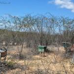 10.11.14 apicultores_agricultores_familiares_agua branca (1)