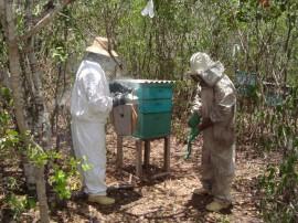 emater governo constroi duas casas de mel no vale do paraiba salgado 2 270x202 - Festa do Mel vai reunir apicultores em Água Branca
