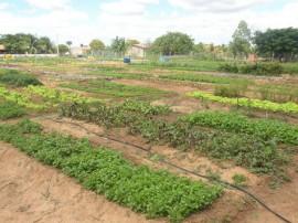 19.12.14 emater incentiva uso desiste made irrigacao econom 1 270x202 - Emater incentiva uso de sistema de irrigação que economiza até 80% de água
