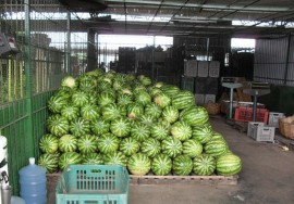 empasa supera volume de 200 mil toneladas comercializadas 3 270x188 - Empasa comercializa mais de 250 mil toneladas de alimentos
