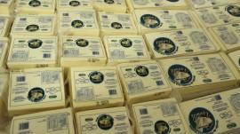 21.01.15 paraiba avanca setor pioneira producao caprinocultura 4 270x151 - Paraíba avança na produção de queijos caprinos probióticos