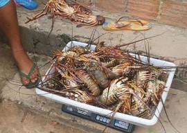 26.01.15 pm apreende caranguejos lagostas 4 270x192 - Polícia apreende mais de 800 caranguejos-uçá e 25 kg de lagosta