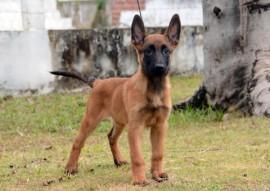 BARÃO 270x191 - Polícia divulga nomes escolhidos para os cães do Canil do Bope