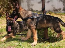 Canil recebe Novos Cães PM Foto Wagner Varela 1 270x202 - Mais de 80 mil pessoas já votaram na escolha do nome dos novos cães do Canil da Polícia Militar