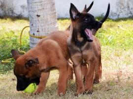 Canil recebe Novos Cães PM Foto Wagner Varela 2 270x202 - Mais de 80 mil pessoas já votaram na escolha do nome dos novos cães do Canil da Polícia Militar