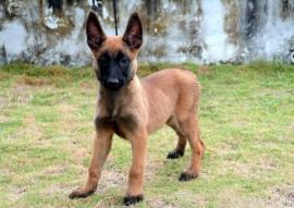 DARA 270x191 - Polícia divulga nomes escolhidos para os cães do Canil do Bope