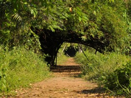 Jardim Botanico foto walter rafael 11 270x202 - Revitalização do Rio Paraíba e implementação de Unidades de Conservação são metas do Governo