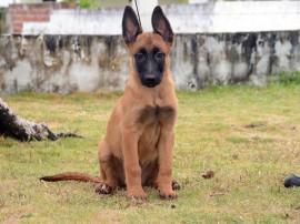 Macho 02 Foto Wagner Varela 270x202 - Polícia Militar lança campanha para escolher os nomes dos novos cães do canil do BOPE