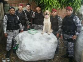 PM Canil da policia 3 270x202 - Cães adestrados treinam para localizar celulares em presídios e fugitivos em matas da Paraíba