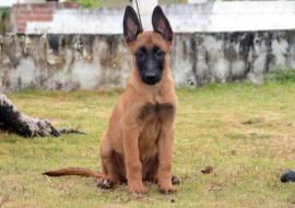 TITAN 270x191 - Polícia divulga nomes escolhidos para os cães do Canil do Bope