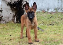VÊNUS 270x191 - Polícia divulga nomes escolhidos para os cães do Canil do Bope