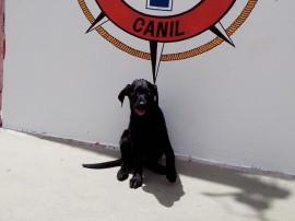 bombeiros recebe mais um integrante do canil 3 270x202 - Corpo de Bombeiros recebe filhote de Labrador Retriever para o Canil da Corporação