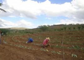 palmaemumbuzxeiro 270x193 - Governo do Estado capacita criadores e distribui raquetes de palma forrageira no Cariri