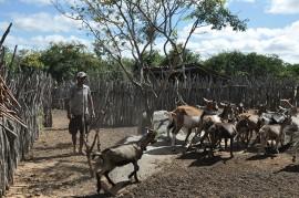 DSC 1577 270x179 - Governo apoia criador de cabras que se tornou referência no Cariri