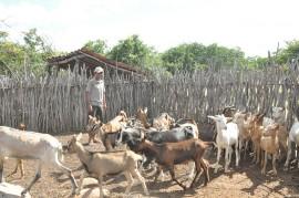 DSC 1585 270x179 - Governo apoia criador de cabras que se tornou referência no Cariri